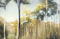Aspen Reverie Fine-Art Print
