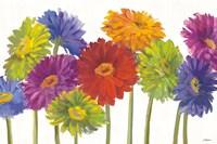 Colorful Gerbera Daisies Fine-Art Print
