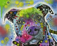 Colorful Pit Bull Fine-Art Print