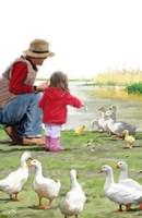 Feeding Ducks Fine-Art Print