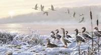 Winter River Geese Fine-Art Print