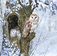 Barn Owl 2 Fine-Art Print