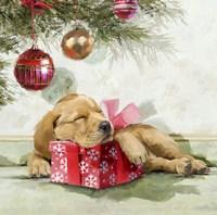 Sleepy Pup Fine-Art Print