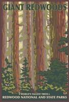 Giant Redwoods Fine-Art Print