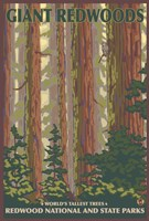 Giant Redwoods Fine-Art Print