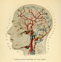 Brain Head Fine-Art Print