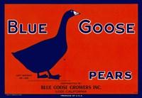 Blue Goose Pears Fine-Art Print