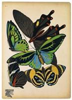 Butterflies Plate 1 Fine-Art Print