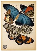Butterflies Plate 2 Fine-Art Print