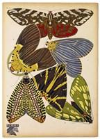 Butterflies Plate 5 Fine-Art Print
