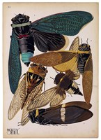 Insects, Plate 1 Fine-Art Print