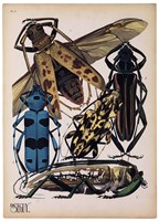 Insects, Plate 13 Fine-Art Print