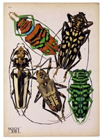 Insects, Plate 14 Fine-Art Print