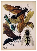 Insects, Plate 15 Fine-Art Print