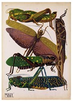 Insects, Plate 16 Fine-Art Print