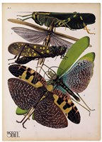Insects, Plate 2 Fine-Art Print