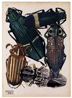 Insects, Plate 4 Fine-Art Print