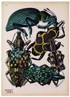 Insects, Plate 6 Fine-Art Print