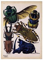 Insects, Plate 7 Fine-Art Print