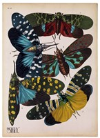 Insects, Plate 8 Fine-Art Print