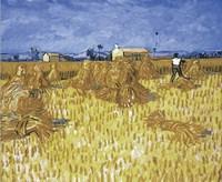 Cornfield in Provence Fine-Art Print