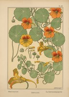 Plate 40 - Nasturtium Fine-Art Print