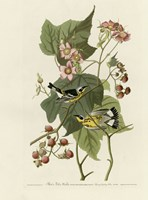 Black And Yellow Warblers Fine-Art Print