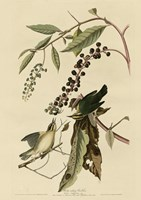 Worm Eating Warbler Fine-Art Print