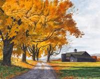 Golden Maples Fine-Art Print