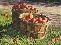 Apple Bushels Fine-Art Print