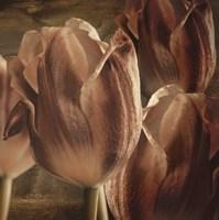 Copper Tulips Fine-Art Print