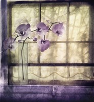 Window Orchids Fine-Art Print