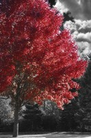 New England Autumn II Fine-Art Print