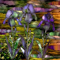 Sunset Irises Fine-Art Print