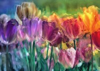 Tulip Farm Fine-Art Print