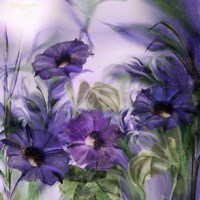Purple Dream I Fine-Art Print