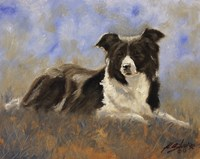 Collie Resting Fine-Art Print