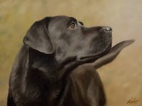 Black Lab 13 Fine-Art Print