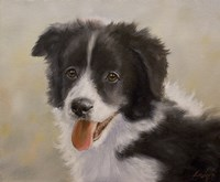 Border Collie 11 Fine-Art Print