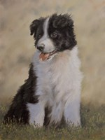 Border Collie 12 Fine-Art Print