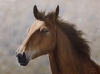 Horse Fine-Art Print
