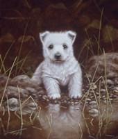 Puppy 1 Fine-Art Print