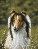 Lassie Fine-Art Print
