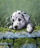 Dalmatian Pup Fine-Art Print