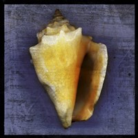 Fighting Conch Fine-Art Print
