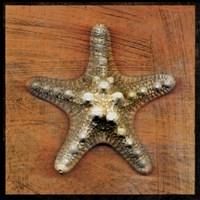 Armored Starfish Fine-Art Print