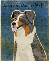 Australian Shepherd Blue Merle Fine-Art Print
