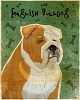 English Bulldog Tan and White Fine-Art Print