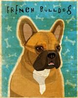 French Bulldog Fawn & White Fine-Art Print