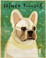 French Bulldog - White Fine-Art Print